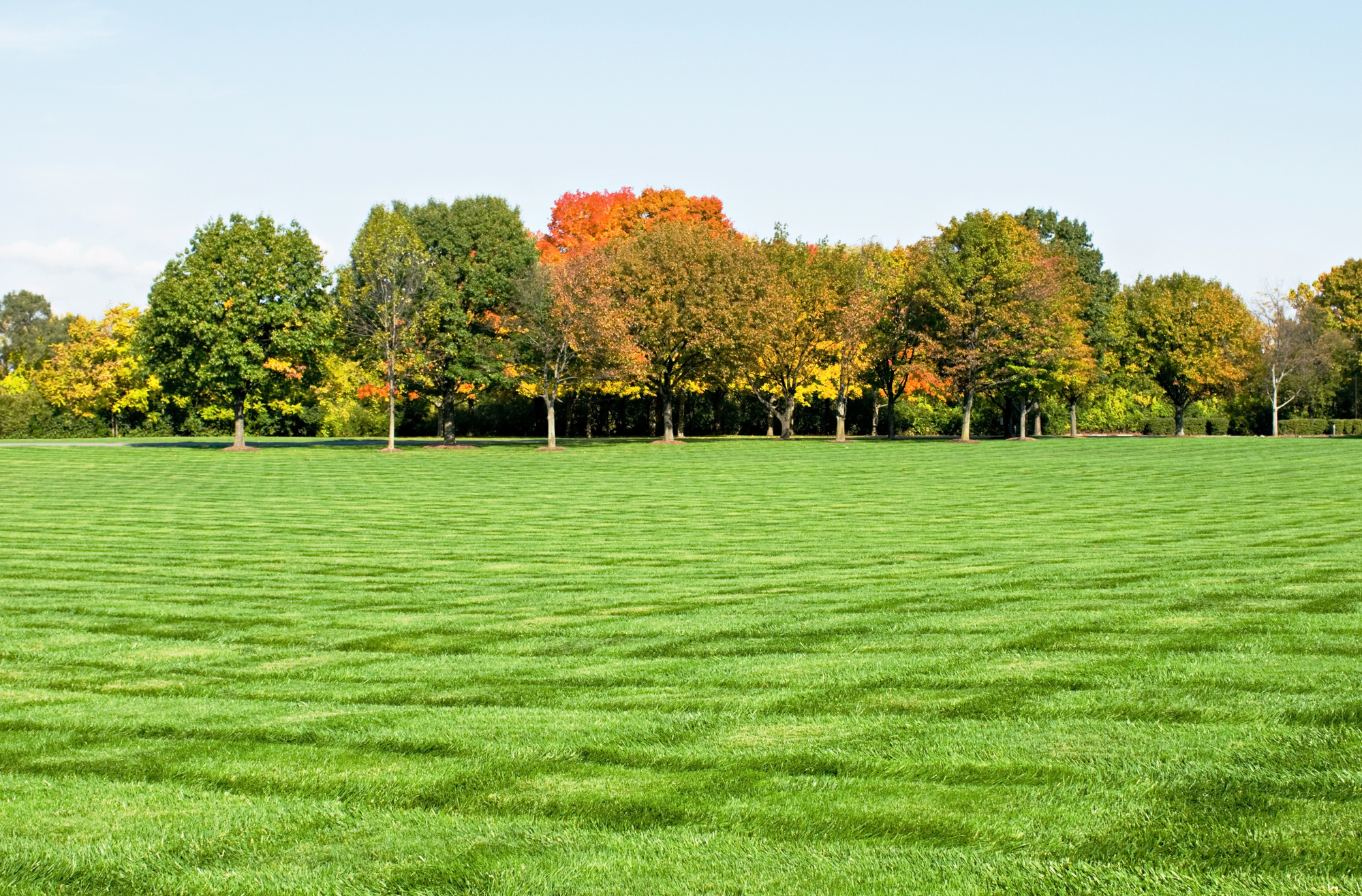 What Is the Best Grass Seed?