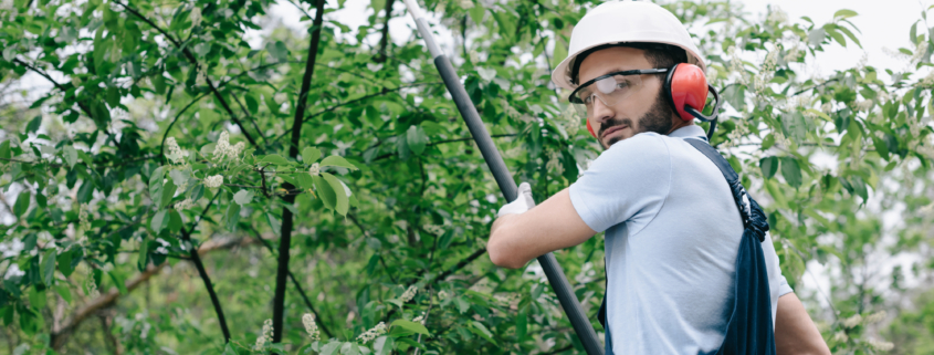 When Is The Best Time To Prune Trees
